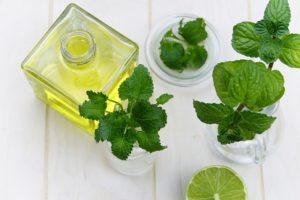Melissenöl gegen Herpes